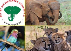 Reise zu den Elefanten 2013