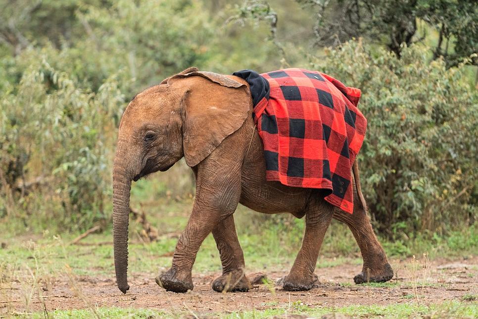 was wiegt ein elefant
