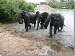kina, mgeni & yatta quitting mud bath