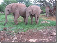 olare & kalama feeding