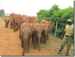 New arrivals are escorted to the bush (6)