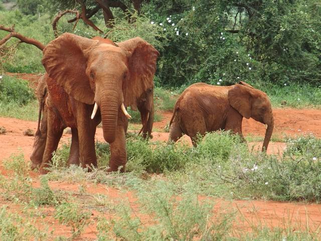 Dabasa vorne mit wildem Bullen & Ndara