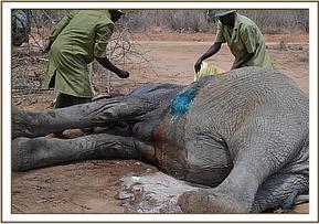 Die grausame Wilderei in Ithumba