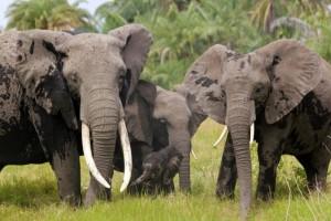 Rea und die RA-Familie im Amboseli-Nationalpark