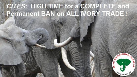 REA-Petition:  CITES – Höchste Zeit für ein komplettes und dauerhaftes Verbot von jeglichem Handel mit Elfenbein!