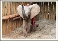 Der traurige Verlust der drei kleinen Elefanten Risasi, Arabukko und Kerio