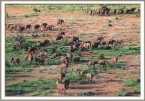 Elefantenbullen_01