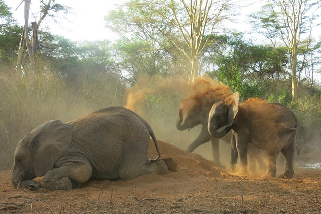 Murera down and other orphans dusting