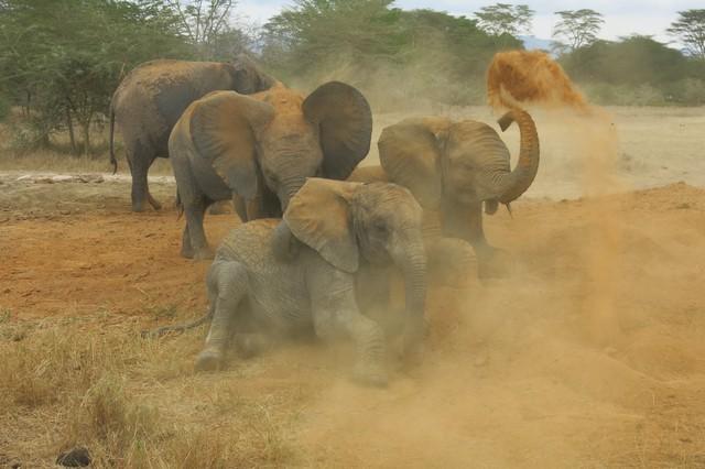 Orphans  enjoying dust (3)