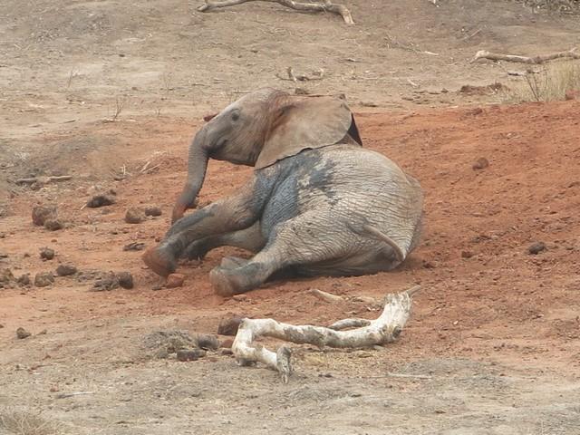 bomani rolling on soil