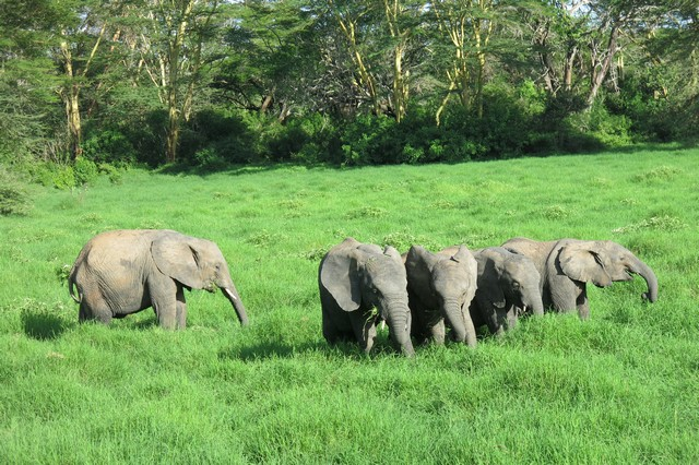 Babies browsing on the grassland (6)