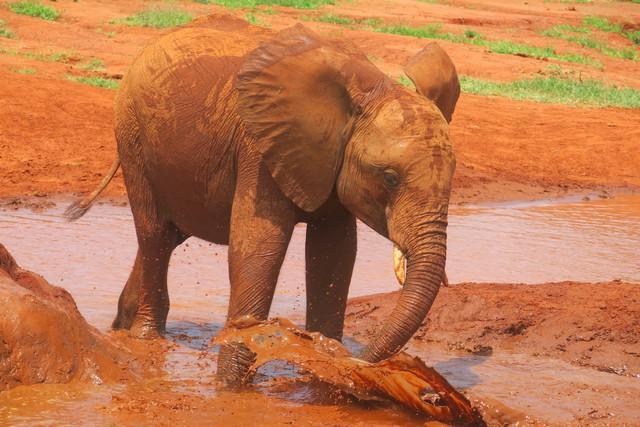 Dabasa enjoying a bathe (4)