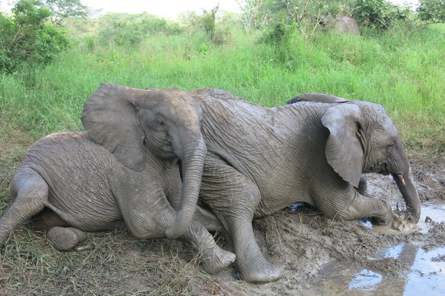 Limalima infront,trying to play together with Sonje on the mud