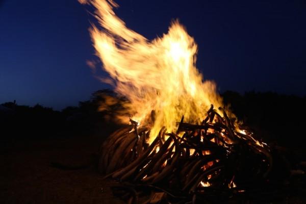 elfenbeinverbrennung2015