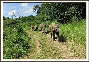 Quanza führt einige ihrer Freunde in Umani an.