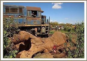 Ein Zug fährt an den toten Elefantenbullen vorbei