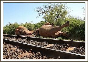 Zwei tote Elefantenbullen