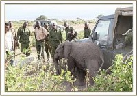 Elefanten-Killer endlich ins Gefängnis gesperrt