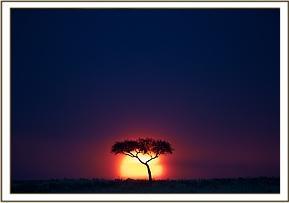 Die Schönheit der Masai Mara