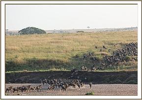 Die Migration