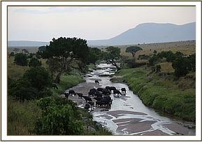 Elefanten überqueren den Fluss