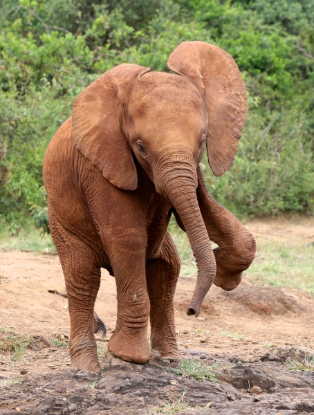 Nairobi babies
