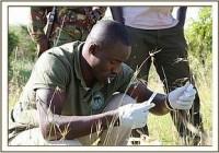 Die Behandlung eines durch eine Schlinge verletzten Elefantenbabys in der Mara durch das Sky Vet Team