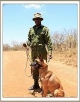 Startschuss für die DSWT Tsavo Hundestaffel