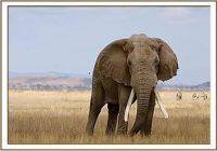 Update: USA erlauben Einfuhr von Elefanten-Trophäen