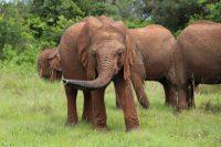 Ein paar Fotos der Waisen-Elefanten