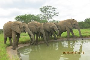 Babies at the watertrough drinking clean water (1)