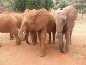 Kenia 2nd rgt become sad when Kivuko rgt is demanding to (1)
