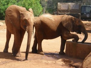 Kenia staying close to the baby Bada on seeing Lempaute pres U