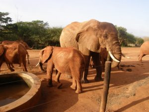 Laikipia staying back with the stkd dependant orphans