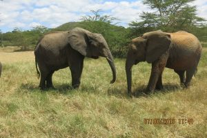 Murera and Sonje picking softy grass (1)