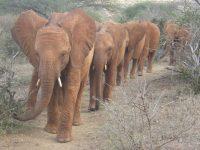 Bilder der Waisen-Elefanten