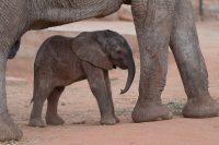 Rettet die Elefanten Afrikas e.V. wird heute 27 Jahre jung.