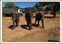 Kelelari, Karisa und Dupotto ziehen nach Ithumba um