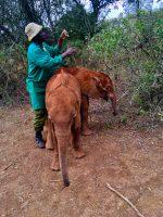 Gruß aus der Nairobi Nursery