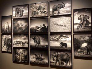 """Impressionen der Ausstellung """"Elephants in Heaven"""" von Joachim Schmeisser"""