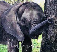 Molly – ein Elefantenmädchen braucht Ihre Unterstützung