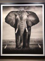 """Verlängerung der Ausstellung """"Elephants in Heaven""""!"""