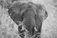 Beunruhigendes aus Botswana