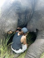 Weniger Konflikte zwischen Menschen und Wildtieren dank Peilsender