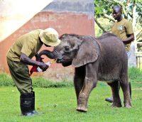 Neues von Elefantenmädchen Molly