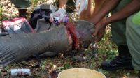 MAPP hilft bei Rettung eines Elefanten