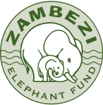 Zambesi Elephant Fund – Spender gesucht