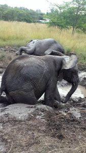 Schlammbad-Spaß