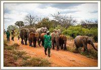 Esampu, Mteto und Mundusi ziehen nach Ithumba um