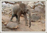 Enkikwe erholt sich weiter von dem Angriff der Löwen